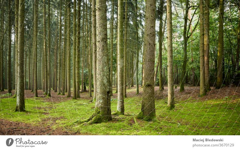 Panoramic view of a forest in early the morning. wood nature green tree foliage scene wilderness trunk nobody lush tranquil scenic panorama woodland adventure