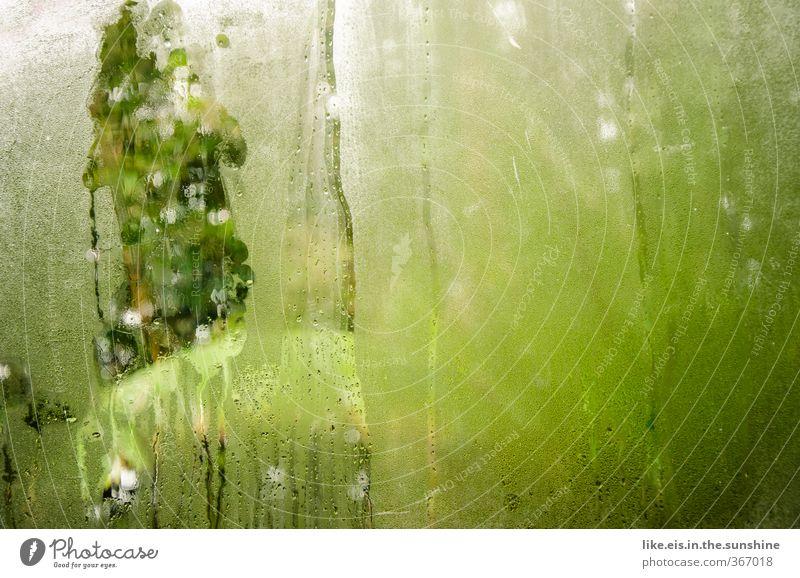Tropen- dunst Nature Vacation & Travel Green Summer Plant Tree Landscape Leaf Environment Rain Fog Climate Tourism Wet Bushes Trip
