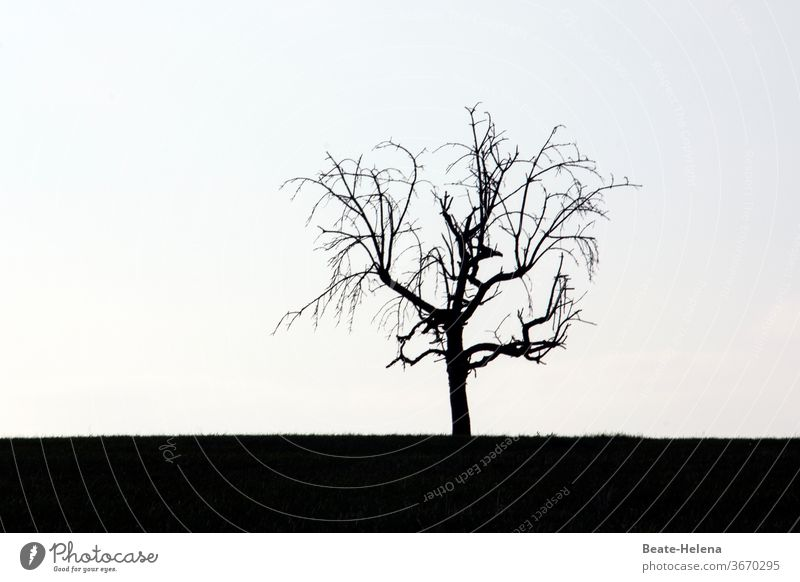 Silhouette: leafless tree against the light black-white Tree Bleak rib branches gnarled Back-light silhouette bleak clear no frills Exterior shot