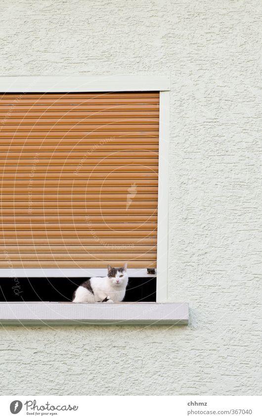 guillotine Pet Cat 1 Animal Looking Sit Curiosity White Dangerous Building Window Wall (building) Plaster Roller shutter Venetian blinds Column Air Disk
