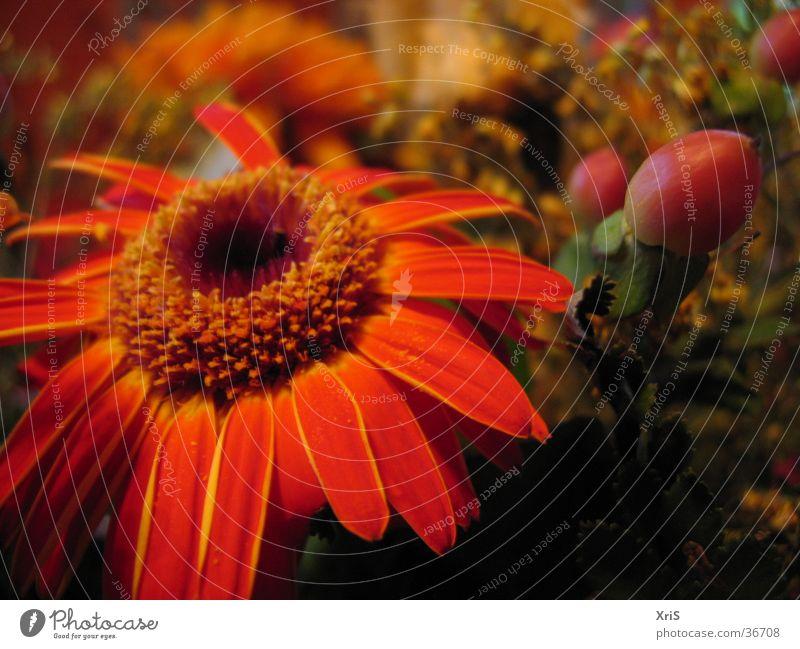 Flower Plant Red Blossom Orange Bouquet Gerbera
