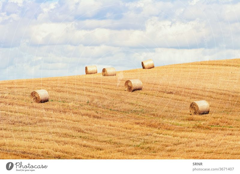 Haystacks on the Field agricultural agricultural area agricultural holding agricultural industry agricultural land agriculture arable area arable land arcadian