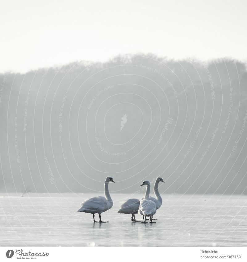 Sky Nature Landscape Animal Winter Forest Cold Environment Lake Bird Horizon Ice Weather Fog Feather Stand