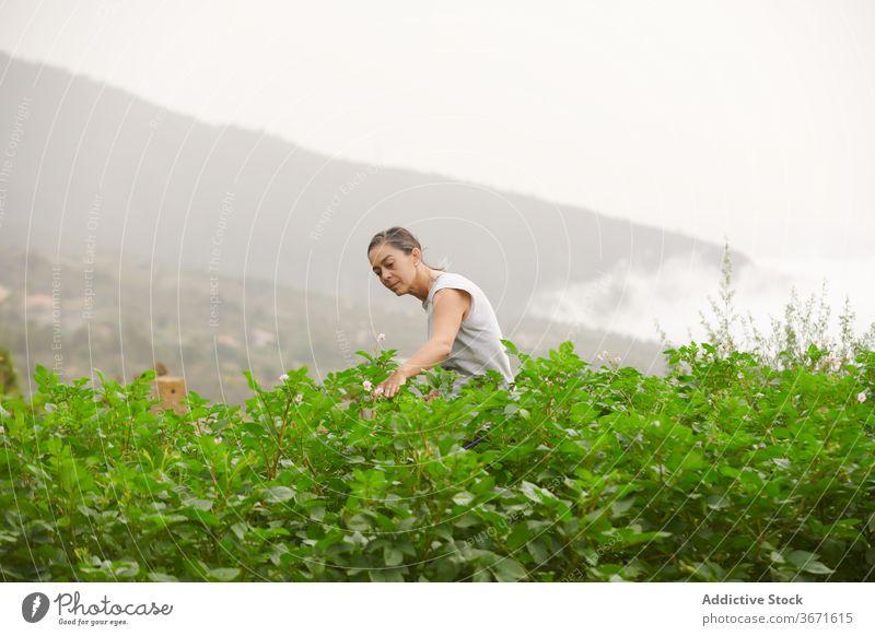 Woman walking along plantation on farm farmer woman green senior summer grow female vegetate cultivate garden old calm retire countryside nature rural