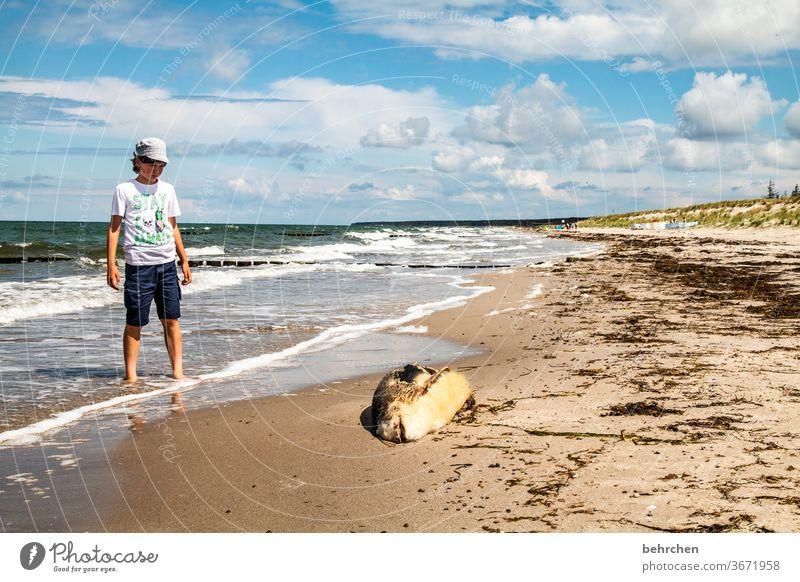 urks... Friday fish?! Germany fischland-darß Tourism Baltic coast Mecklenburg-Western Pomerania Summer Infancy Child Vacation & Travel Exterior shot