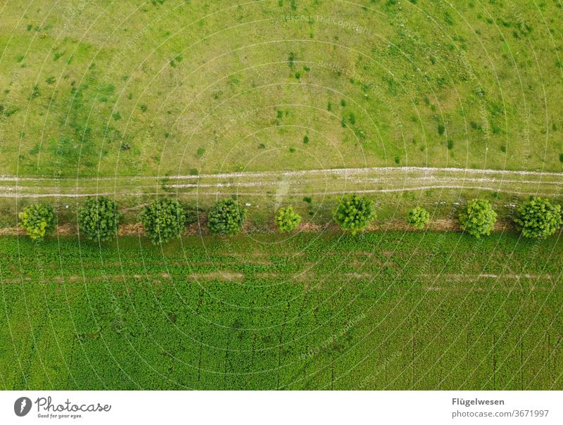 """dirt road Field path"""" Working in the fields Margin of a field Meadow meadow flowers meadow herbs Aerial photography aerial photograph Lanes & trails Lawn"""