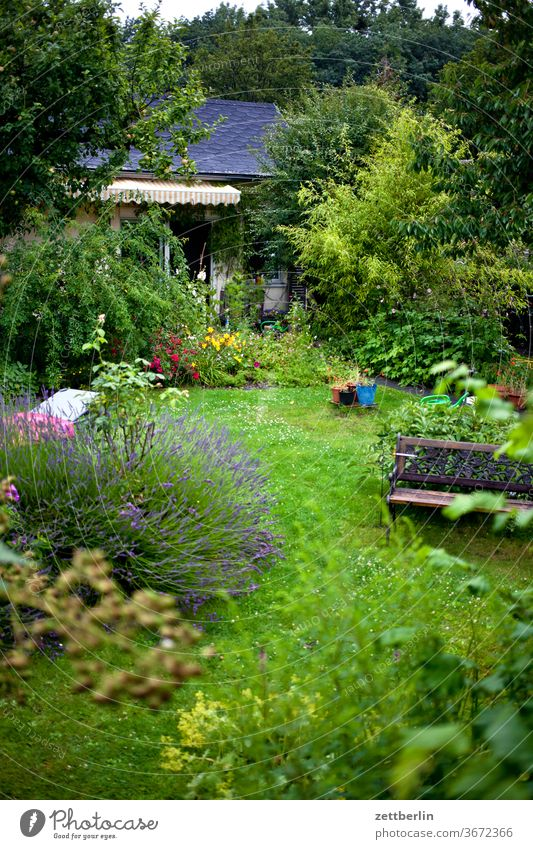 little garden Garden plot blackberry Gardenhouse tepid Lavender Garden allotments tree flowers blossom bleed Relaxation Bench holidays Grass Sky Deserted Nature