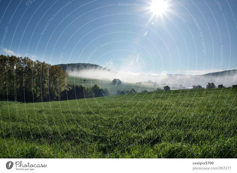 Thirsty sun Nature Landscape Plant Animal Water Sky Sun Sunrise Sunset Sunlight Spring Climate Beautiful weather Fog Grass Agricultural crop Field Forest