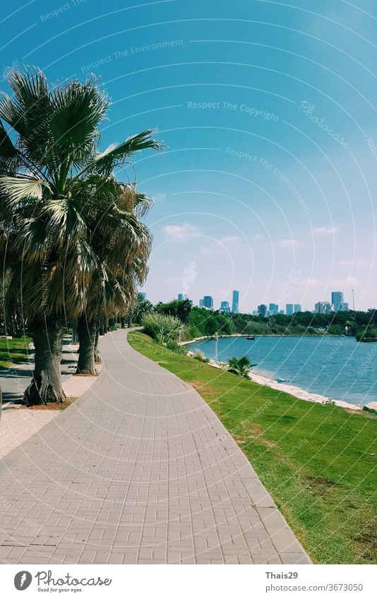 river side view on Tel Aviv city, palms and green grass, blue sky sunny day, Israel mediterranean sea scenic hot riverfront shore outdoors travel tourism