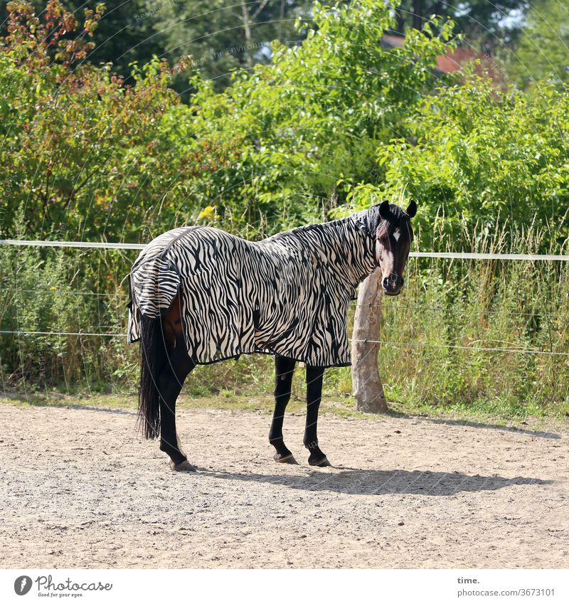 carnival of animals Horse Animal Horse blanket zebra pattern Fence Sand place sunny Shadow green bush look Observe Stand baffled Funny Crazy Inspiration turn