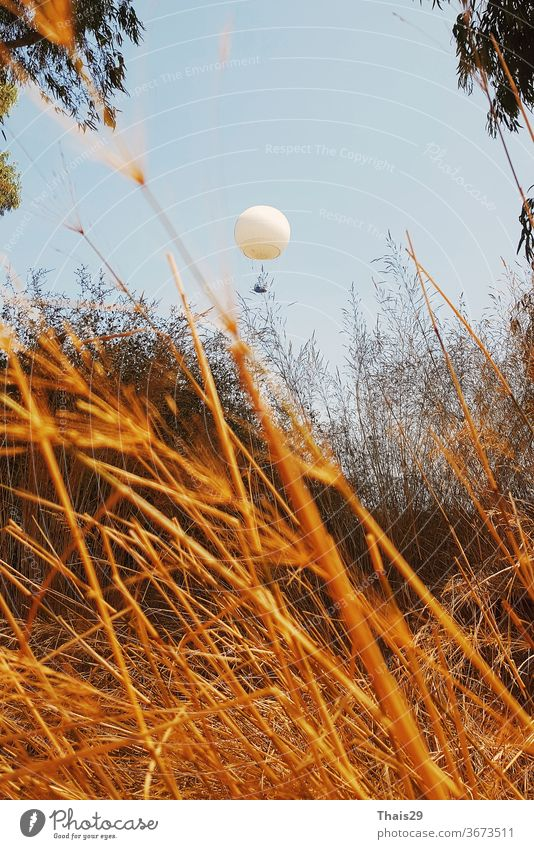 white flying balloon ballon over a golden grass field yellow sunshine panorama autumn colours sunny yellow fall colours bright yellow autumn yellow september