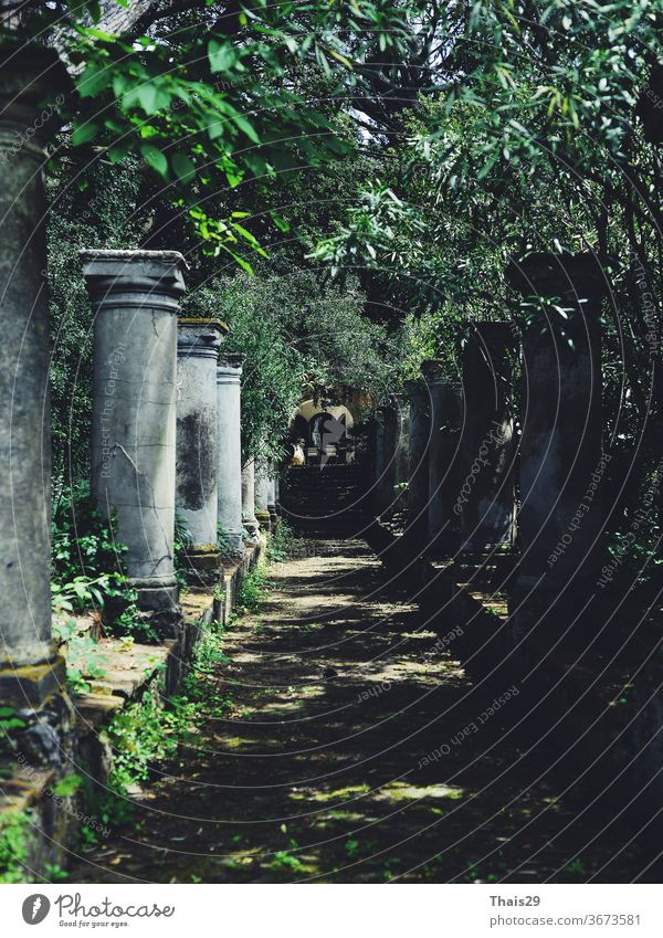old colonnade columns standing in line, green trees tunnel, old italian villa, nobody, shadow corridor with arch italy mediterranean pergola pathway plant
