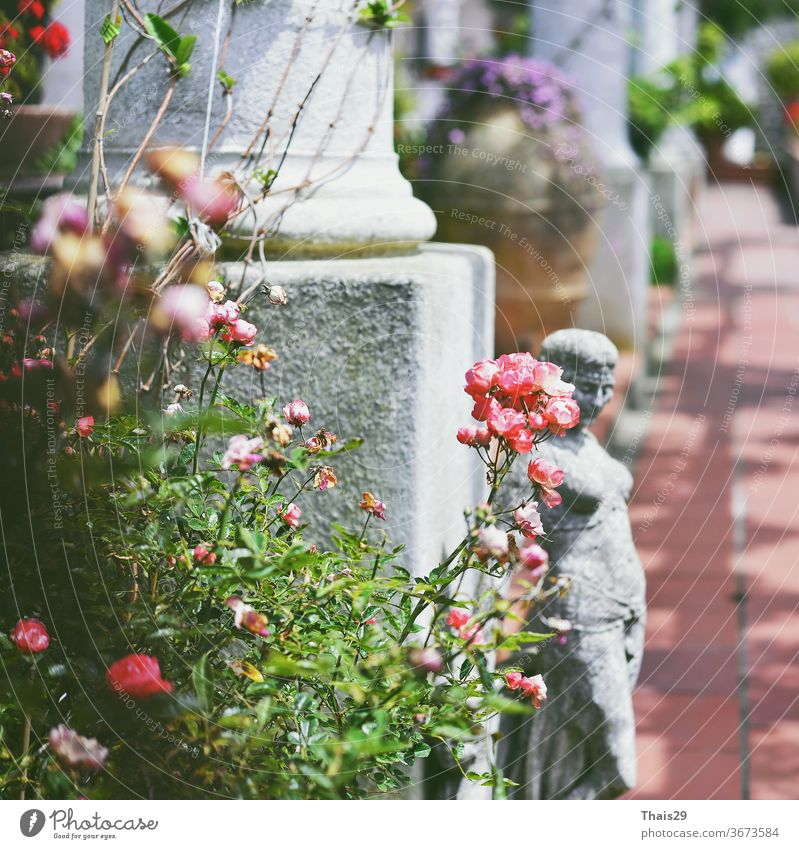 old white antique columns and woman statue sculpture between roses and flowers antiquities classicism facade girl mythology leaves italy italian europe art