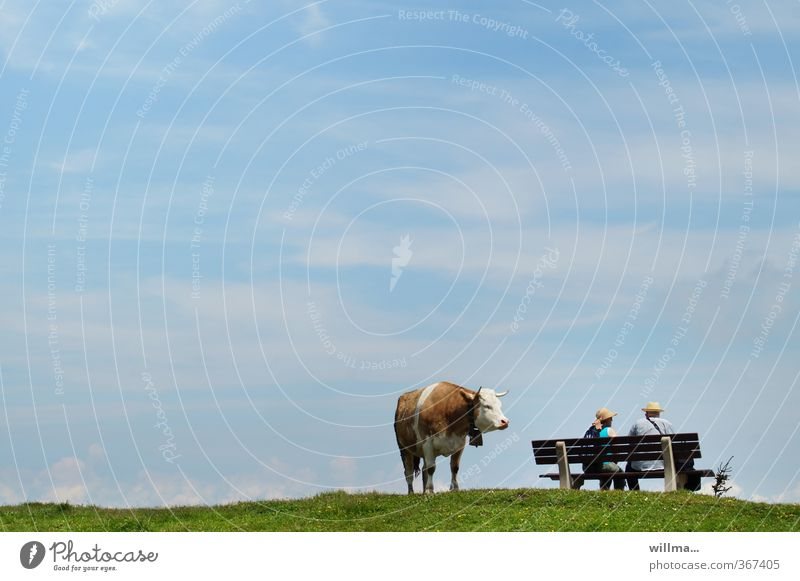 thoughts of a cow on the abyss Cow Alpine pasture Couple Partner Adults Human being Bench Observe Funny Sit Relaxation Expectation Break Surprise Irritation