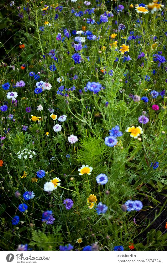 Flowering bee pasture in summer flowers blossom bleed Relaxation holidays Garden Grass allotment Garden allotments Deserted Nature Plant Lawn tranquillity