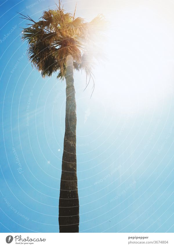 Palm tree against the light with blue sky green Plant Summer Vacation & Travel Sun Day Beach Exterior shot Sky Blue Deserted Summer vacation Exotic Island