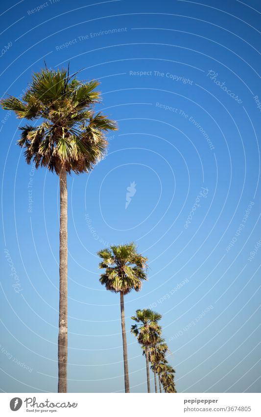 palm palms Palm frond Palm tree Colour photo Plant Nature green Exterior shot Deserted Exotic Vacation & Travel Sky Tourism flaked Summer vacation Blue Trip