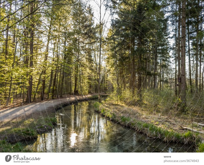 View over a clear stream into the forest Morning mood calm copy space countryside creek drinking water environment landscape morning morning sun nature