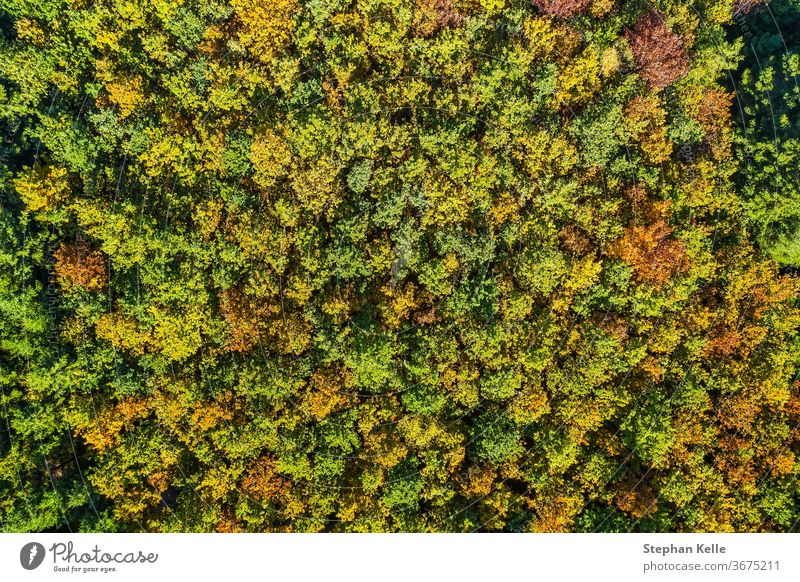 Summer warm sun light forest aerial view summer tree park nature drone landscape green background travel fall beautiful golden photography above autumn outdoor