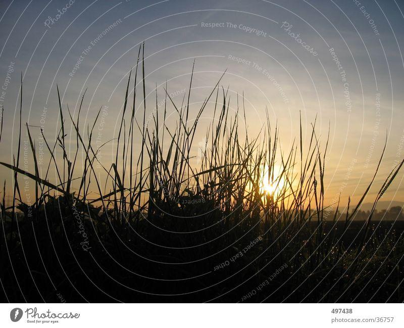 morning dew Grass Damp Dew Sunrise Morning Dawn