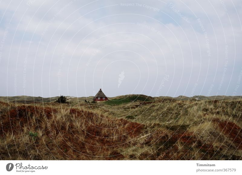 Cottage. Vacation & Travel Environment Landscape Plant Sky Clouds Weather North Sea Denmark House (Residential Structure) Vacation home Esthetic Simple Natural
