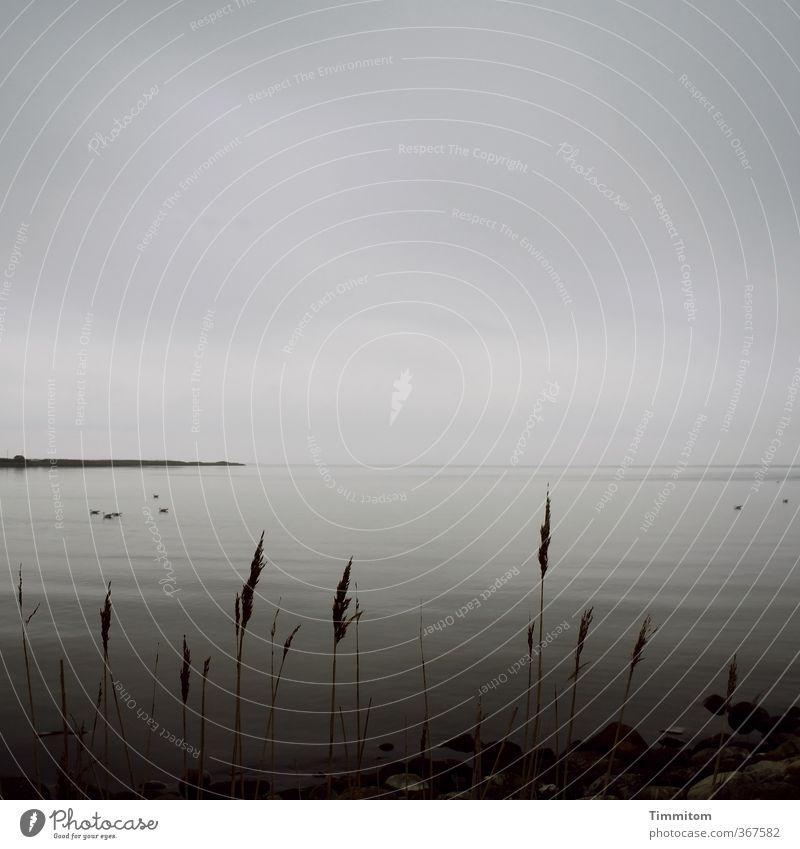 Sky Nature Vacation & Travel Water Plant Calm Landscape Clouds Black Far-off places Dark Environment Emotions Coast Gray Horizon