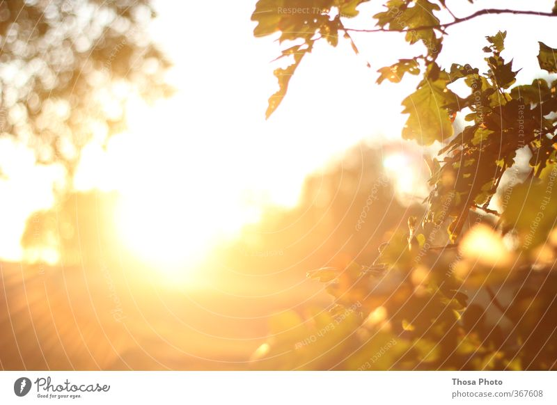 Blind Summer Sun Bright Yellow Red Leaf canopy Radiation Twigs and branches Dusk Exterior shot Day Light Deep depth of field