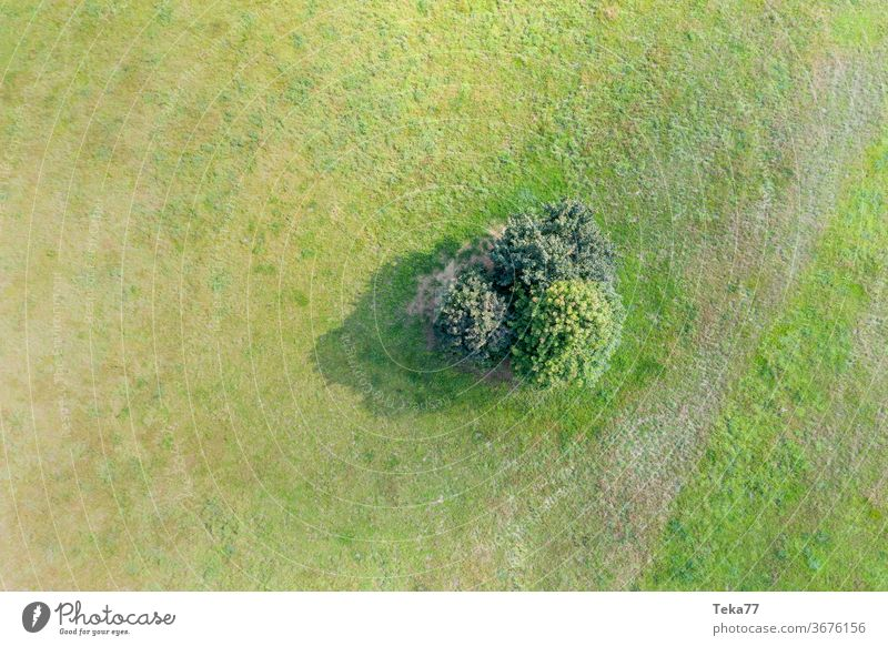 some trees on a meadow from above tree island green lush sun sunny farm top down summer
