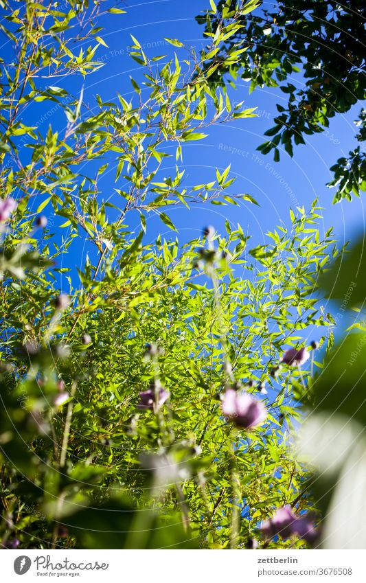 Bamboo and autumn anemones Branch tree flowers blossom bleed Relaxation holidays Garden Grass Sky allotment Garden allotments Deserted Nature Plant Lawn