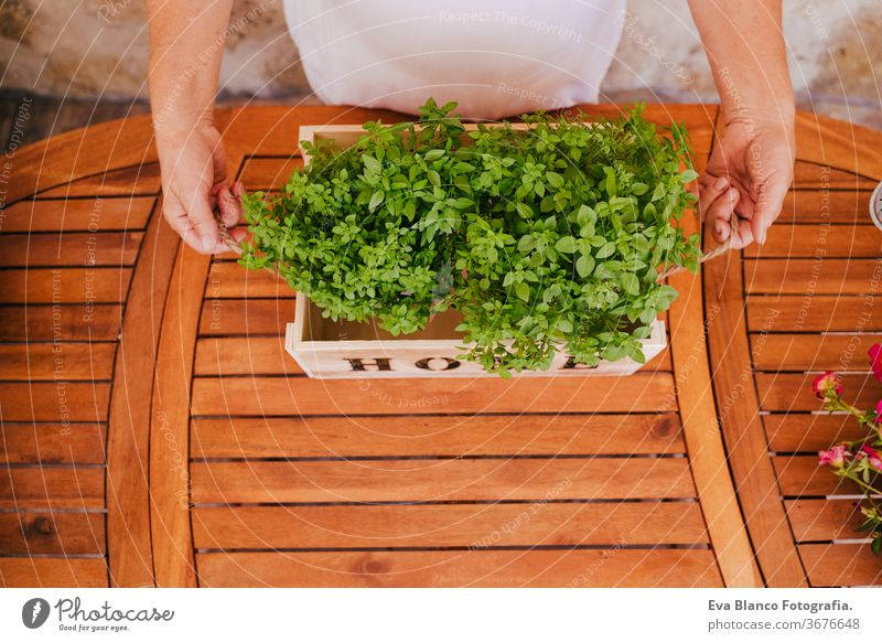 unrecognizable middle age woman working with plants, holding a wooden box with fresh plants, gardening concept. environment protecting. sprouts bio friendly 60s