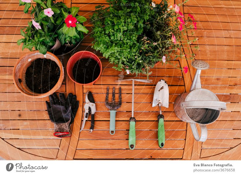 top view of gardening tools on a wooden table nobody shovel plants gloves eco bio dirtied care lawn artificial landscaping summer farming cultivate object
