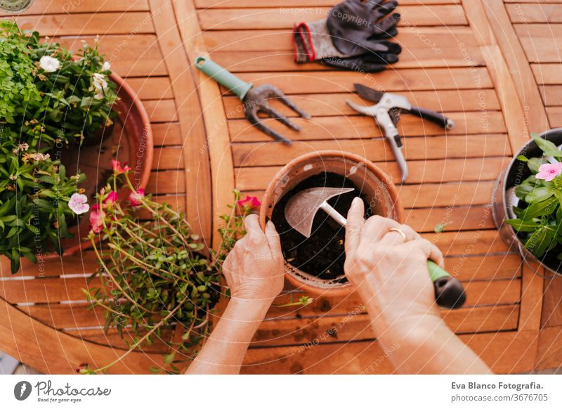 unrecognizable middle age woman working with plants outdoors, gardening concept. Nature. top view 60s retired home earth flowers agriculture hobby horticulture