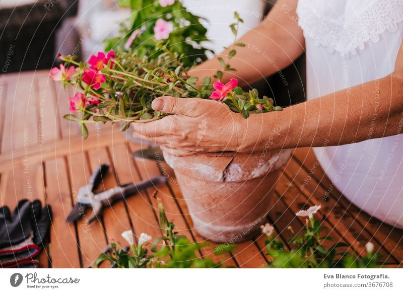 unrecognizable middle age woman working with plants outdoors, gardening concept. Nature. 60s retired home earth flowers agriculture hobby horticulture dirtied