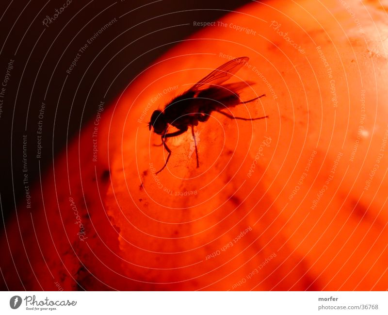 Animal Warmth Orange Fly Insect Physics Sphere Crawl Mars