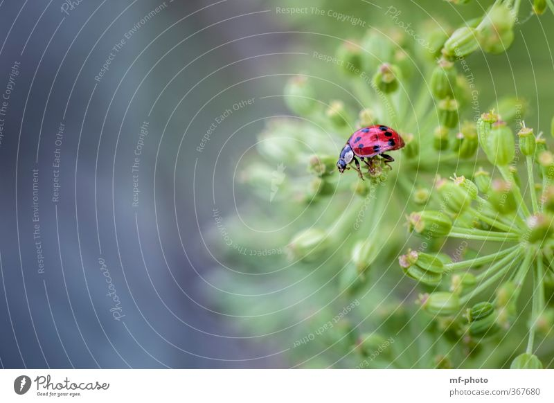 Nature Blue Green Plant Red Animal Beetle