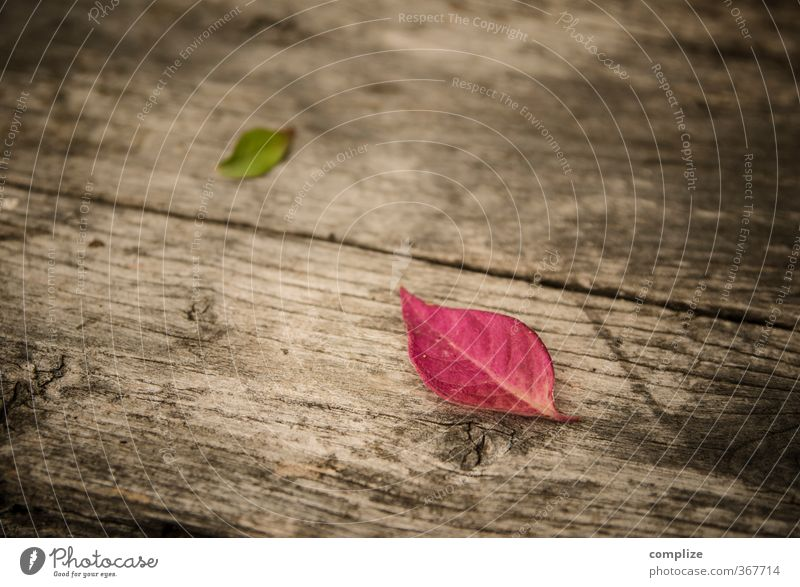 In autumn Wellness Relaxation Calm Fragrance Cure Spa Plant Tree Leaf To fall Green Pink Idyll Autumn leaves Autumnal Bench Wooden bench Colour photo