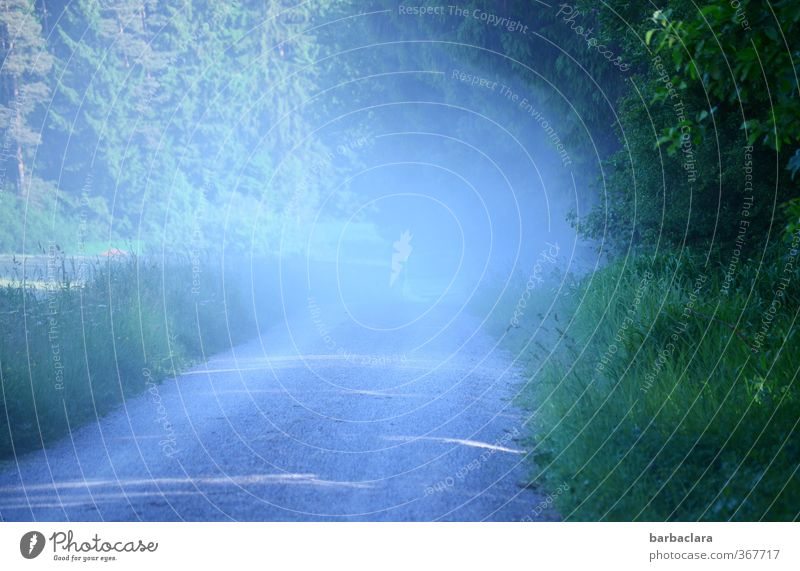 raise dust Landscape Earth Sand Air Sunlight Summer Meadow Field Forest Lanes & trails Footpath Car Driving Illuminate Exceptional Wild Blue Green Movement