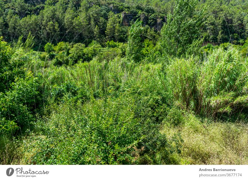 View of the landscape of the Mijares river bed with lots of vegetation in very green tones as it passes through the town of Ayodar scenery overgrown environment