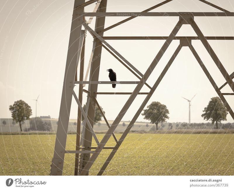 City Green Summer Tree Loneliness Landscape Animal Gray Horizon Bird Field Climate Beautiful weather Energy Future Threat
