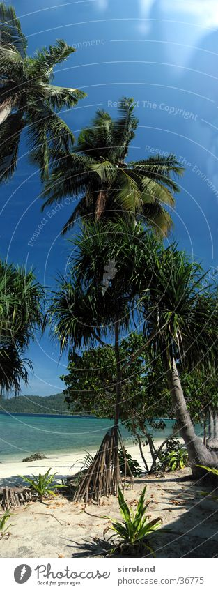 Ko Lipe Thailand Beach Ocean Coast Sun Calm Palm tree Summer Panorama (View) Wide angle Vacation & Travel Loneliness Untouched Far-off places Green Sand Island