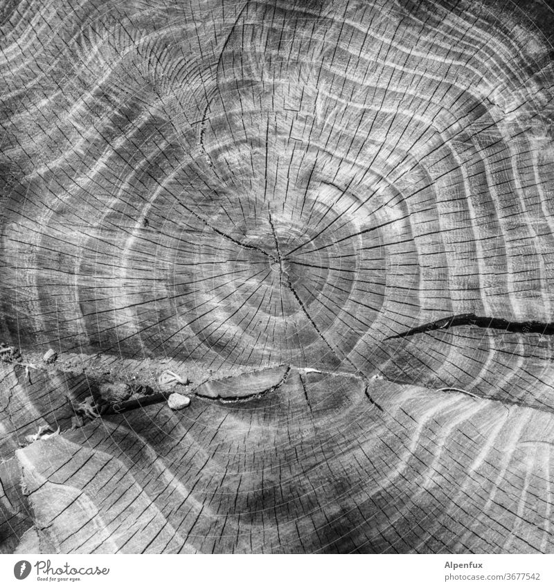 Birthday Calendar Annual ring Tree trunk wood Exterior shot tree Nature Deserted Structures and shapes Environment Close-up Brown Pattern Detail Forest Forestry
