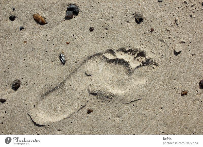 Barefoot on the beach is always nice. Beach Coast Ocean sea ocean Sandy beach trace feet footprint vacation coastal migration Relaxation tranquillity relaxation