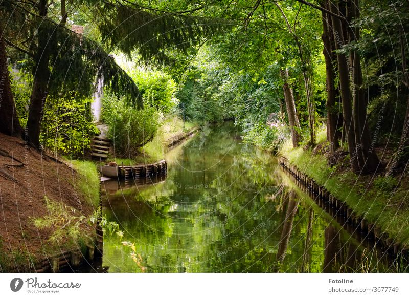 Spreewald Panorama Water Exterior shot Nature River tree Landscape Colour photo Environment Forest Deserted Plant Reflection River bank Beautiful weather