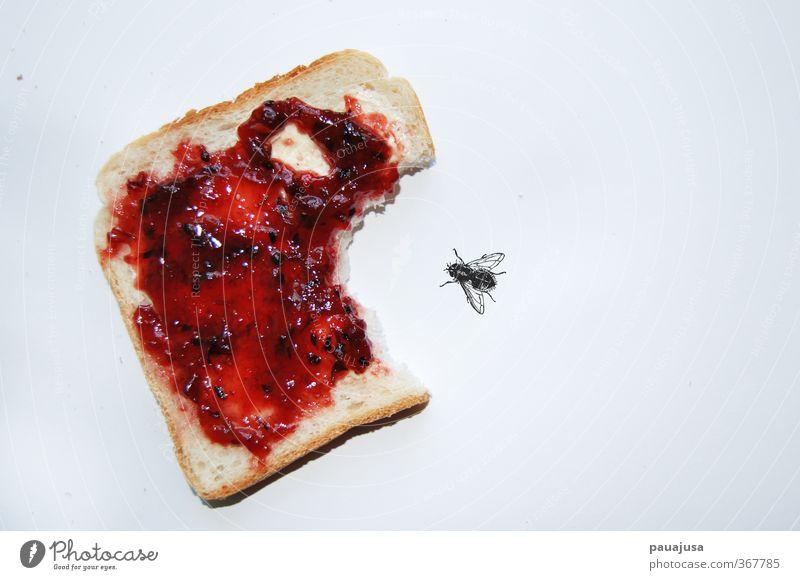 Marmeladenrache Food Fear Fly Anger Candy Breakfast Bread Bizarre Surrealism Aggression Aggravation Horror Absurd Revenge Jam Toast