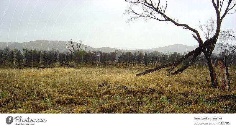 Beautiful Tree Clouds Grass Rain Landscape Wet Bizarre Australia Bad weather