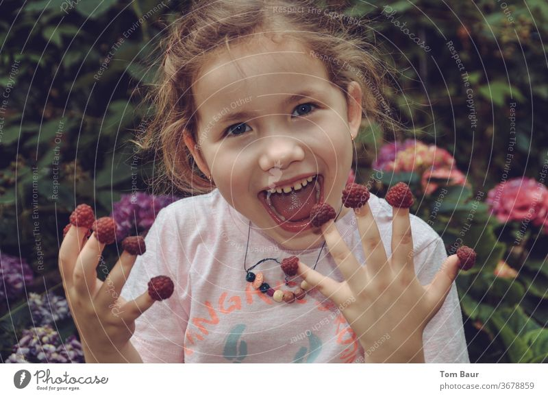 Girl eats raspberries off her fingers girl Brash Eating Fingers Raspberry Laughter Grinning issts Child Joy portrait Face Sweet Cute by hand Human being already