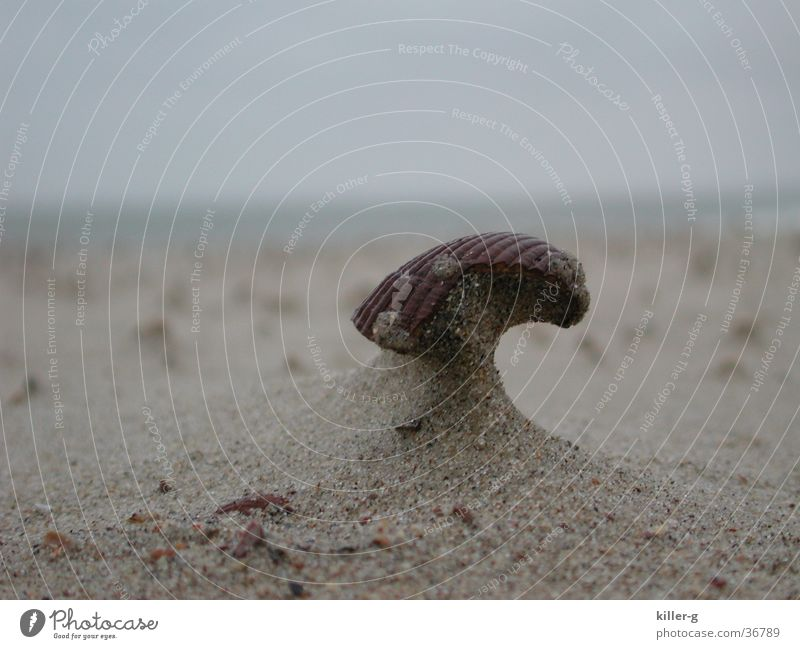 Ocean Beach Sand Wind Mussel Helmet Sanddrift