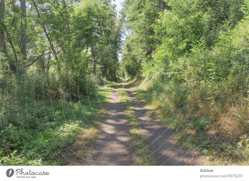 Sunny path at noon Summer off Forest light spots sunny huts green Nature forest path spring deflection bushes Wild Midday nobody plants