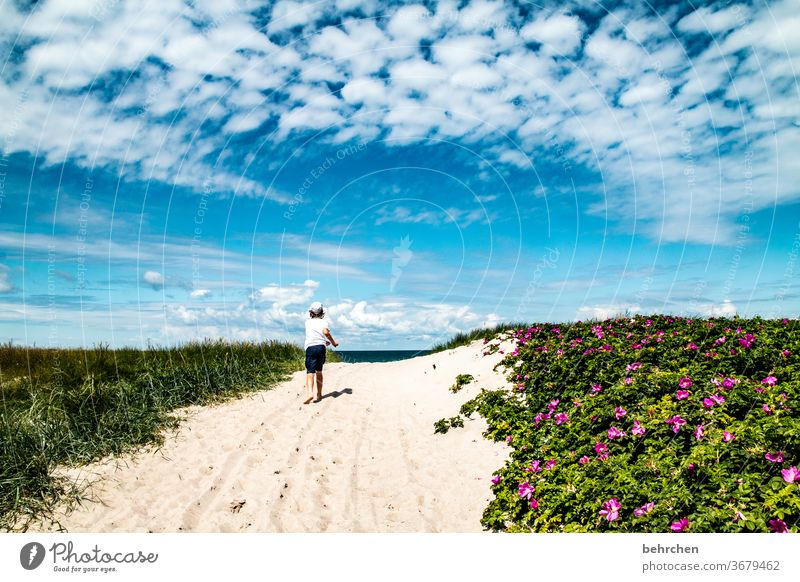 Day at the sea Sand Idyll Playing Mecklenburg-Western Pomerania Romp fortunate Summer Contentment Happy Germany Happiness Baltic coast muck about Tourism Child