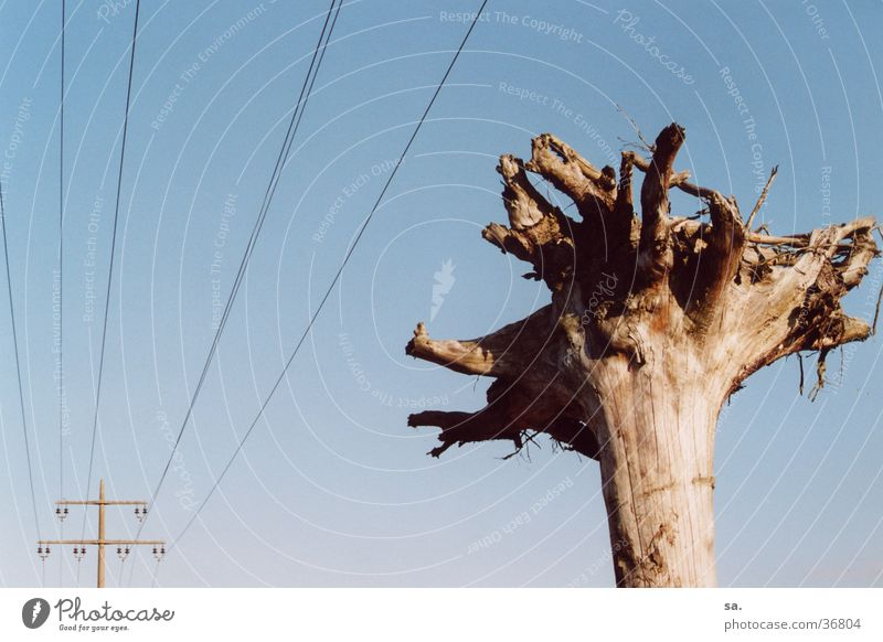 veins Tree Electricity Converse Sky Line Blue